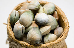 Fresh live cockle clams in basket